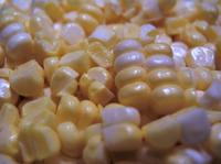 Sweet_corn_2